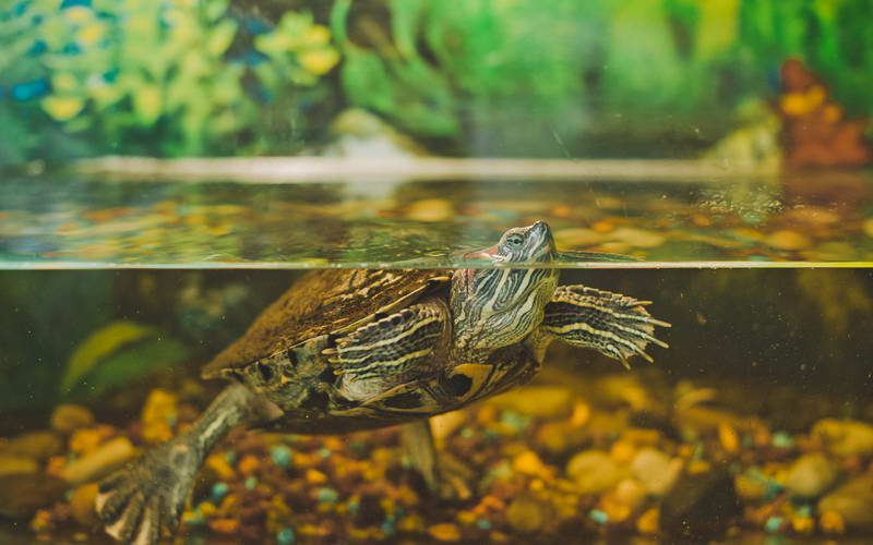 חוות צבי הים בברוולה - Beruwala